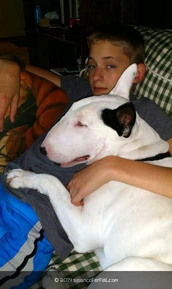 Jackson the Bull Terrier