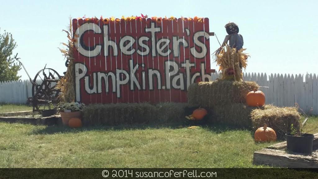 Chester's Pumpkin Patch